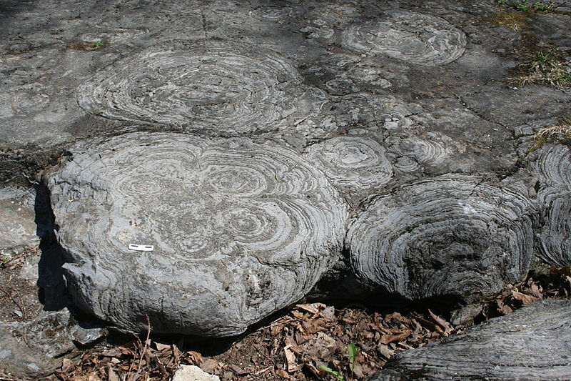 Stromatolites in limestone near Saratoga Springs, NY, by M. C. Ryget via Wikimedia Commons