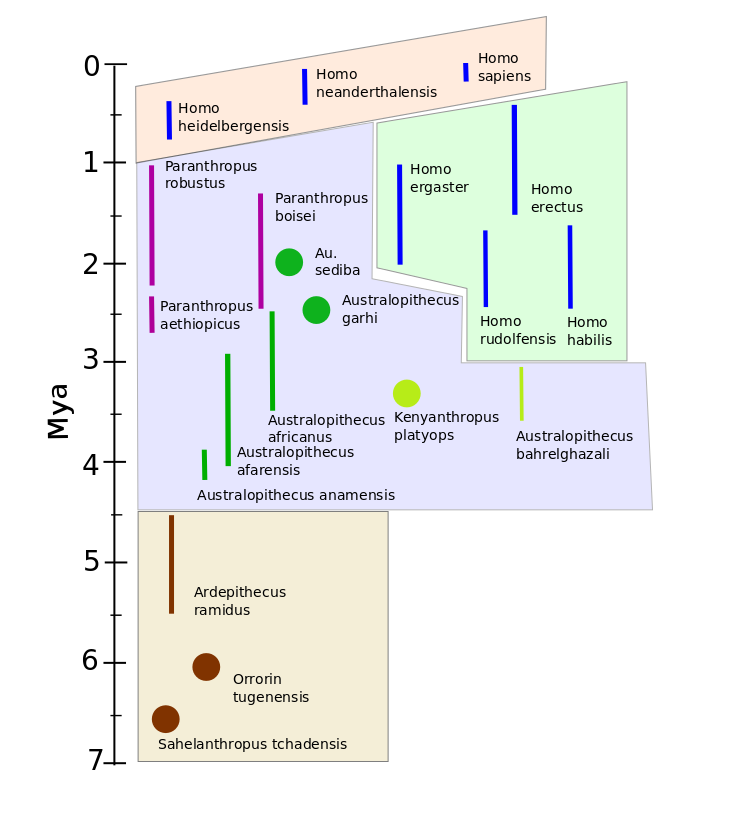 Timeline and grouping of principal fossil hominid species