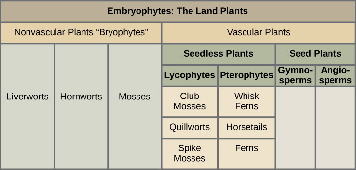 Major divisions of plants, from Openstax College.